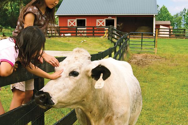 Visitors gets hands-on time with the animals at Juniper Moon Farm. Courtesy Photo