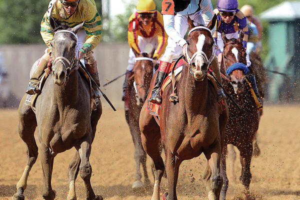 After a rocky start, In Lingerie prevailed in the 2012 Black-Eyed Susan Stakes.Courtes of the Maryland Jockey Club, Jim McCue