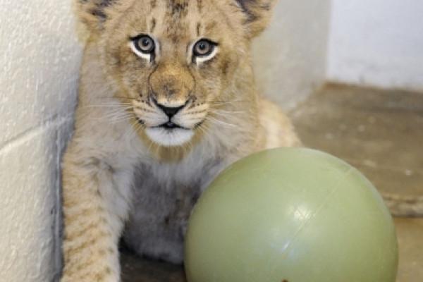 Courtesy of The Maryland Zoo