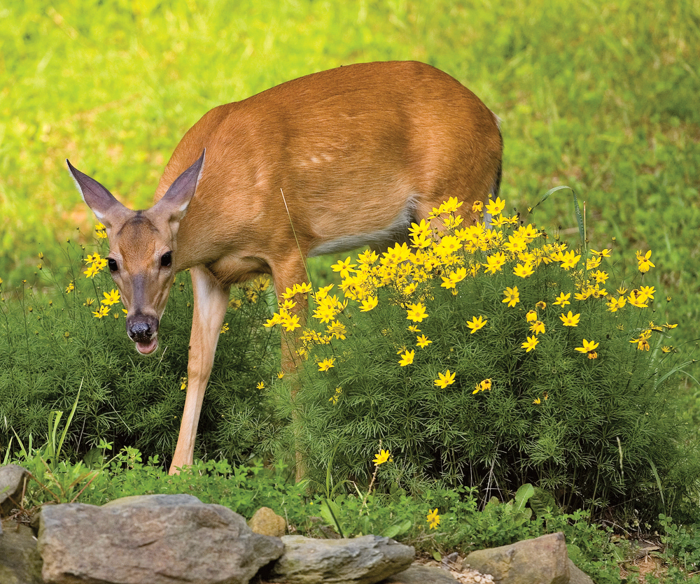 tips to deer proof your garden